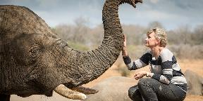Minden elefánt megérdemel egy csordát