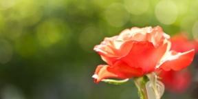 Lenyűgöző rózsabirodalom