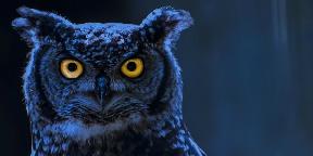 Éjszaka a vadak között
