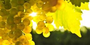 Miért igyunk bort?