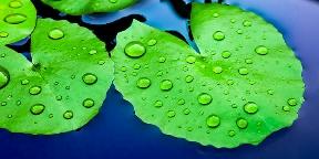 Biomimetika: technológia, á la nature
