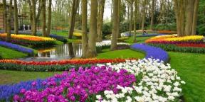 Lenyűgöző szépségű virágoskert