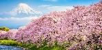 A virágnézés hagyománya