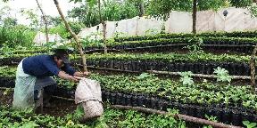 Ázsiai kávészemek Indiától Indonéziáig